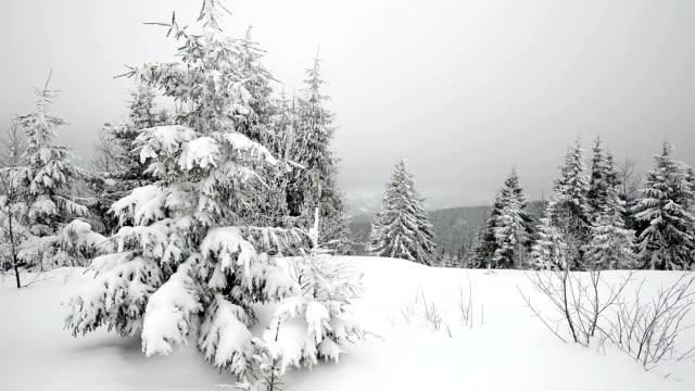 Winter smow video