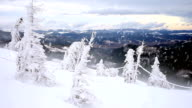 Winter snow storm blizzard, fir trees full of snow, ice frost on plants video