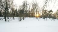 Winter sunset landscape. video