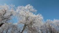 Winter Trees video