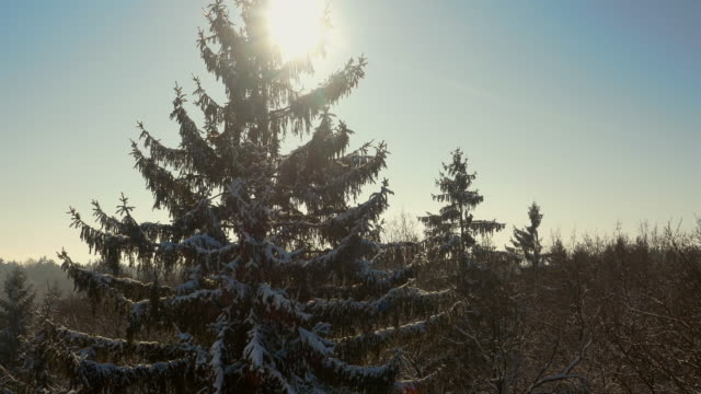 AERIAL Wintry mixed forest video