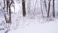 SLO MO Wintry Woods video
