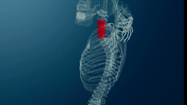 Wireframe 3d animation of skeleton with neck pain. Blue background. video