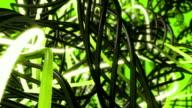 Wires in Loop Green video