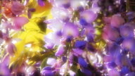 Wisteria flowers - colorful romantic feminine floral background video