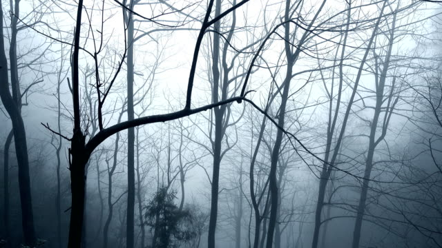 Withered branches are surrounded by clouds at Zhangjiajie video