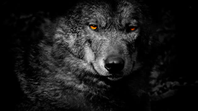 Wolf Growls With Fiery Eyes Abstract video