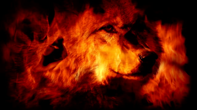 Wolf In Flames Abstract video