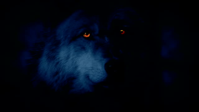 Wolf Looking Around At Night With Glowing Eyes video