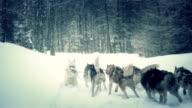 wolfs running in snow video