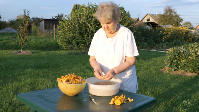 Woman 80s cleans chanterelle mushrooms in bowl video