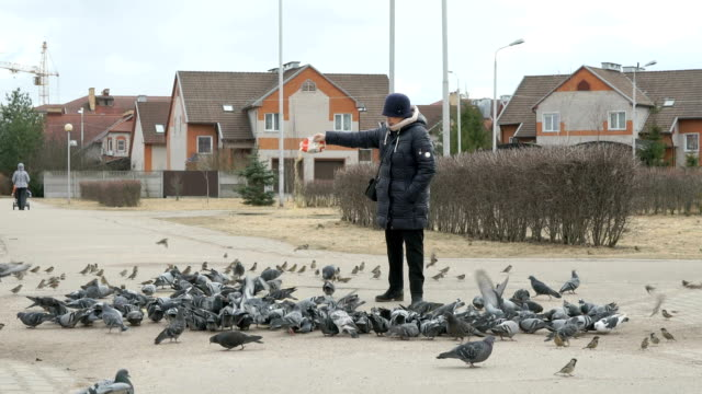 Woman aged 60s feeding flock of pigeons video