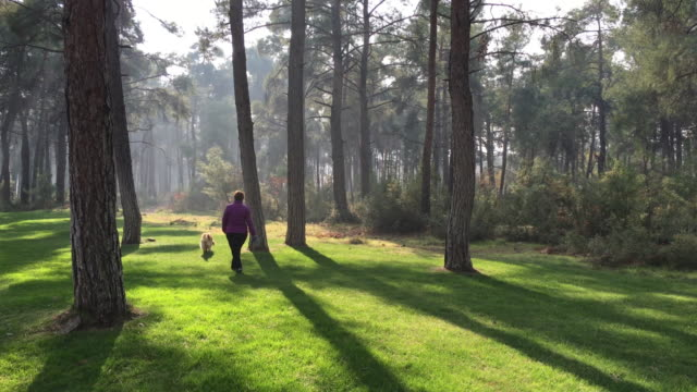 Woman and Dog Walking in Forest video