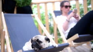 A woman and her dog relaxing in a city park video