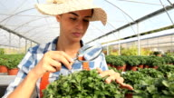 woman at work in greenhouse with magnifying glass, care plants to growth video