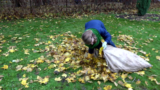 woman bring leaves into fabric bag in garden. Seasonal work. FullHD video