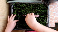 Woman caring for seedlings video