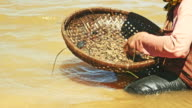 Woman catching clam in a pond video
