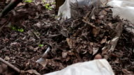 Woman clean the dry old leaves in the garden video