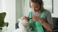 Woman Cleaning Dog Mouth Teeth With Toothbrush video