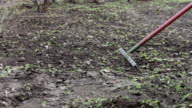 woman cleans the garden from last year's dry leaves with rake video