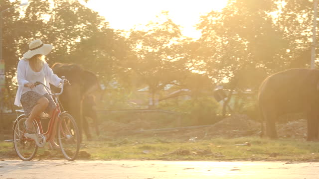 Woman cycles past elephants grazing in field, sunrise video