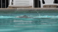 Woman Drowning in Swimming Pool video