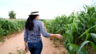 Woman farmer walking in corn field video