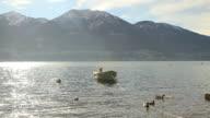Woman feeding ducks by the lake video