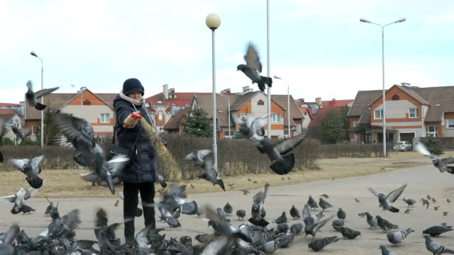 Woman feeding flock of pigeons and sparrows video