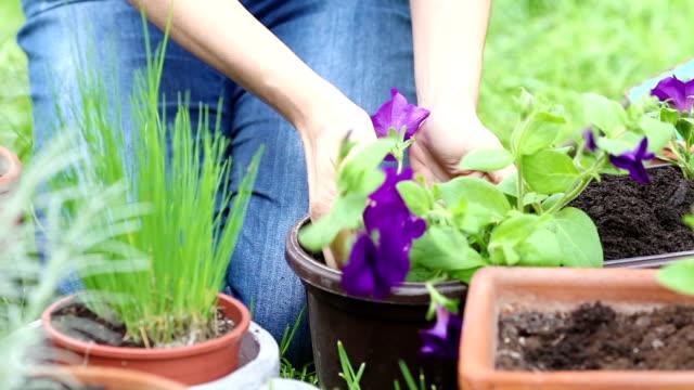 Woman gardening video