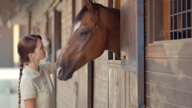 SLO MO DS Woman giving horse a treat to eat video