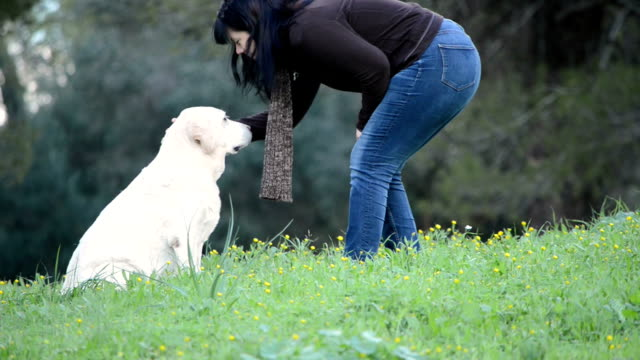 Woman going to senior dog -Labrador -sitting in grass video