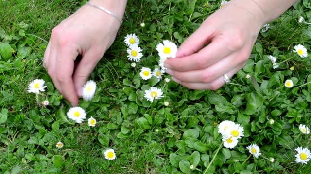 woman hand daisy flower video