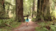 Woman hiker explores old growth forest Redwood National Park California video