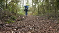 Woman hiker hiking in rain forest video