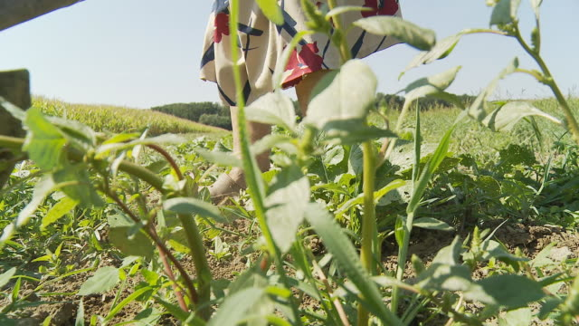 HD: Woman Hoeing Weeds In The Field video