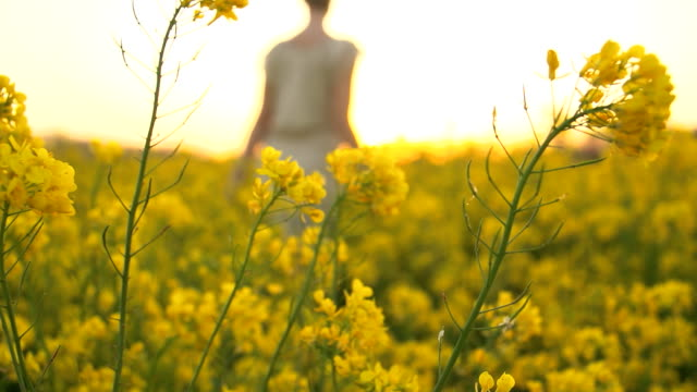 HD SLOW-MOTION: Woman In The Canola Field video