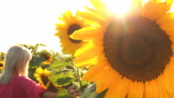 HD: Woman In The Field Of Sunflowers video
