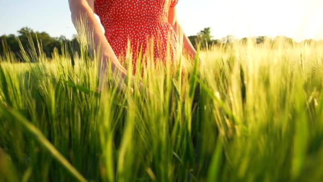 HD SUPER SLOW MO: Woman In Wheat video