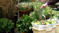 Woman is buying a bunch of tulips video