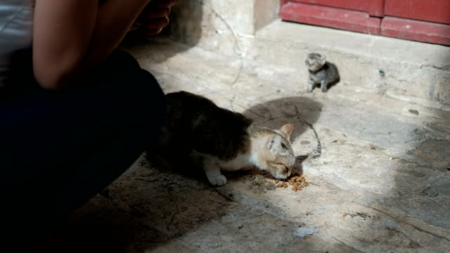 Woman is feeding a hungry cat with a small kitten on the street video