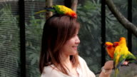 A woman is feeding colorful parrot on hand video