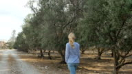 A woman is walking on an olive plantation video