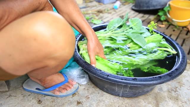 Woman is washing organic vegetable video