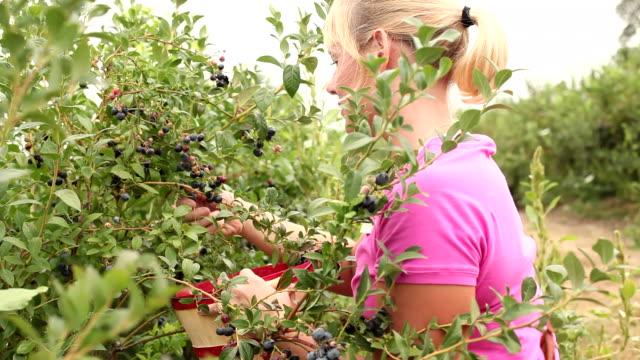Woman picking blueberries video