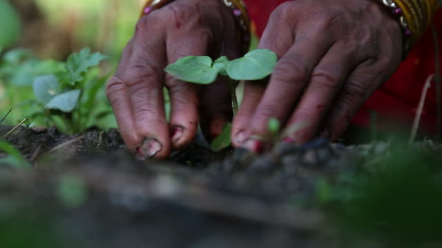 Woman planting in a garden video