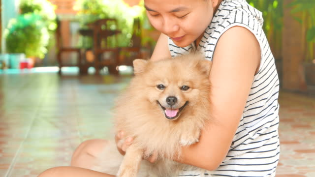 Woman Playing with Pomeranian Dog video