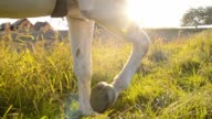 SLO MO Woman riding horse along a cultivated field video