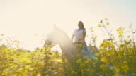 SLO MO Woman riding horse in canola field video